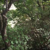 木漏れ日と小川のせせらぎ